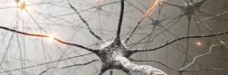 iStock_000010100054_Large_neuron1